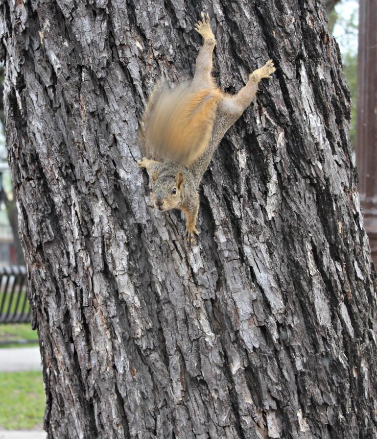 hello mr squirrel